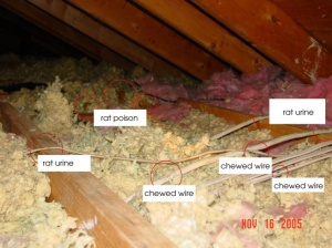 gross attic